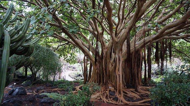 Ein Baum auf den Kanarische Inseln
